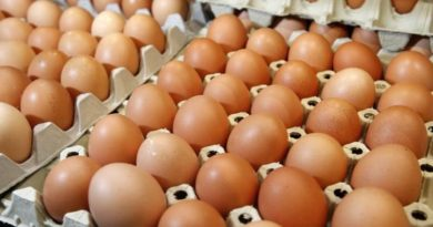 Contaminated Eggs Scandal Spreads From Europe to Asia